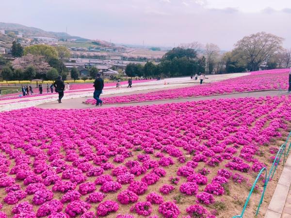 💖🌼太田市は花盛り🌼💖